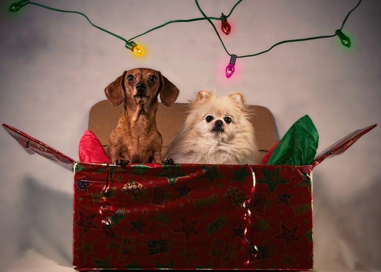 Christmas and gift