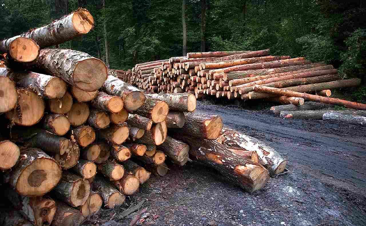 manipur forest