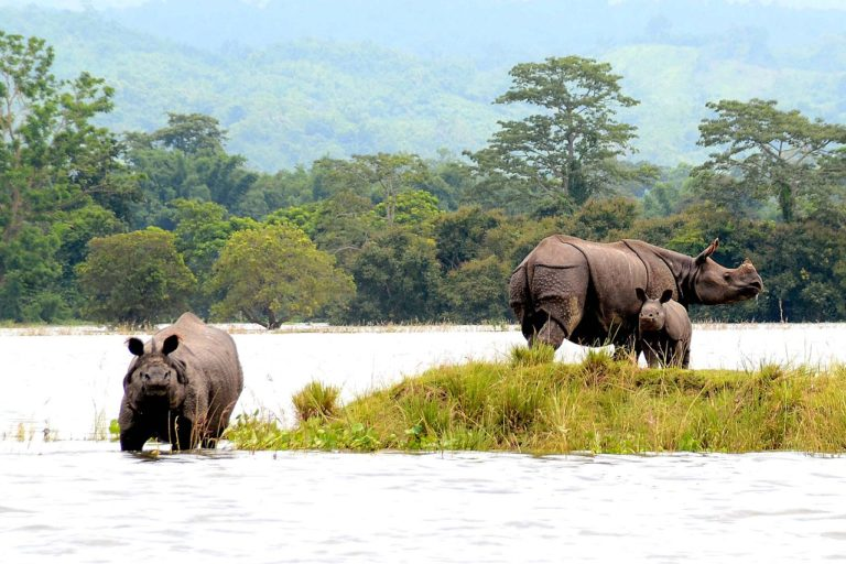rhino -wildlife