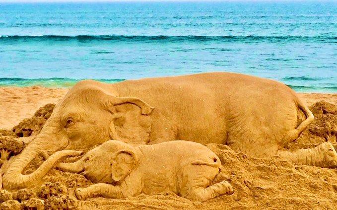 Kerala Pregnant Elephant death