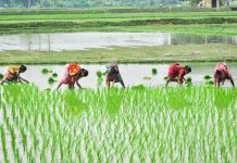 Indian women working on the fields/Pixabay